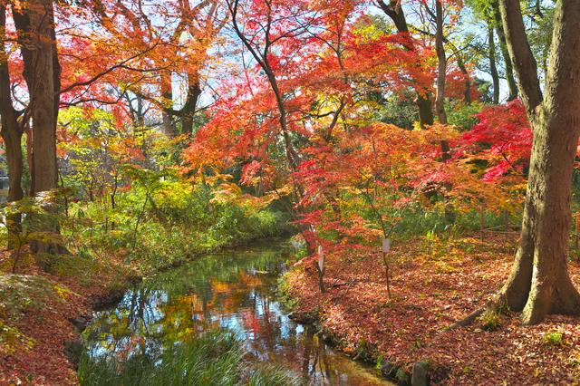 水と暮らす街 京都